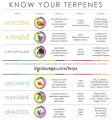 inyo-terpenes-infographic-v2.png