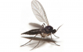 animal-cockroach-insect-invertebrate-mosquito.png