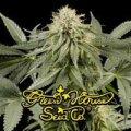 Green_House_Seeds_-_White_Rhino.jpg