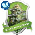 Royal_Queen_Seeds_-_Amnesia_Haze_Automatic.jpg