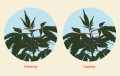 how-to-top-cannabis-plants@2x-1.png