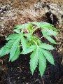 biljka10041.jpg