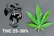 thc-gehalte-gorilla-glue-25-30-procent.jpg