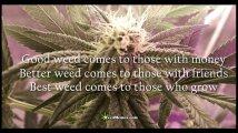 good-weed-best-weed-quotes.jpg