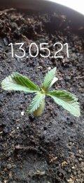 20210513_144601.jpg