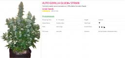 Auto Gorilla Glue#4.png
