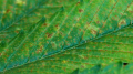 Screenshot_2.png