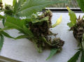 Screenshot_7.png