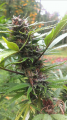 Screenshot_11.png