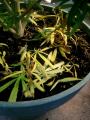Screenshot_5.png