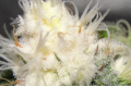 Screenshot_9.png