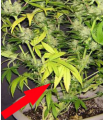 Screenshot_12.png