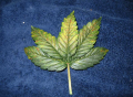 Screenshot_6.png