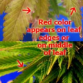 Screenshot_4.png